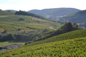 Le Comité Vin Auvergne-Rhône-Alpes fédère les appellations de la région