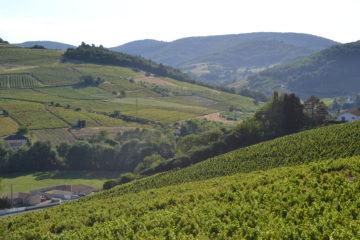 Les appellations du Beaujolais, tout comme les autres appellations de la région, auront bientôt un lieu à Lyon.